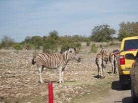 safari2 sm.jpg