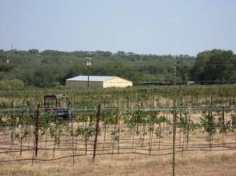 vinyards small 3.jpg